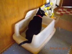 室内猫用トイレ