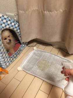 室内犬の消臭